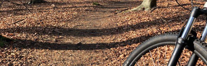 fiets in bos goed